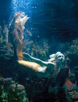 sex mermaid having with a