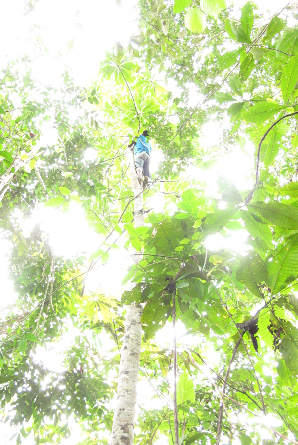 A Matses Man in the Canopy - Photo by Morgan Maher web1