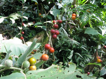 A Garden In Motion: Indigenous Amazonian Permaculture