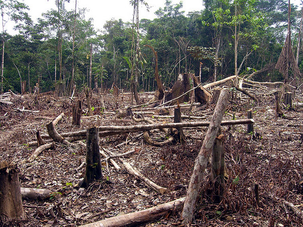 Slash-and-burn-agriculture-in-the-Amazon-photo-by-Matt_Zimmerman